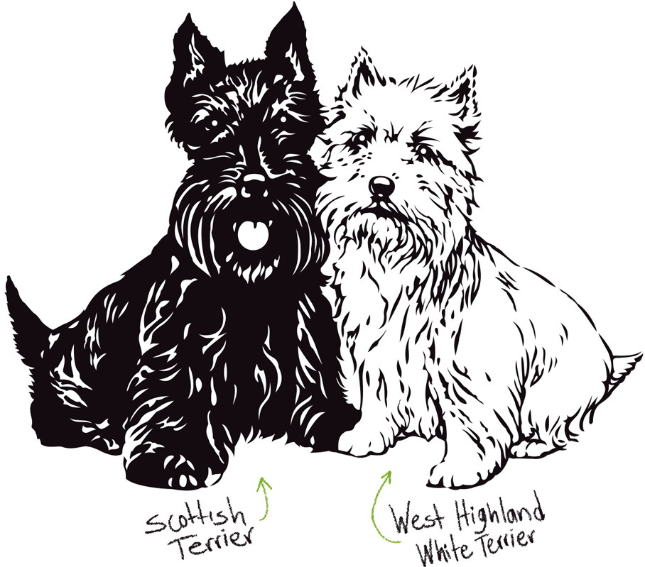 Los Icónicos Terriers Escoceses Black White